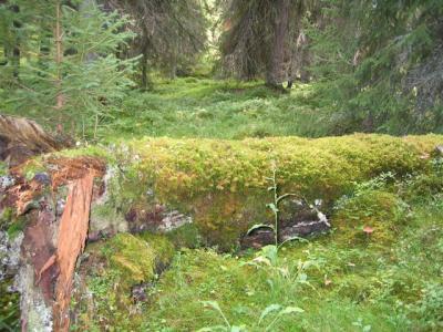 Mossfäll